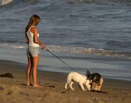 كيفية المشي مع كلب بشكل صحيح ، والتكبير