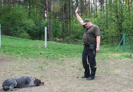 Metody szkolenia psów myśliwskich