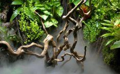Как да изберем една саксия за стайни растения -