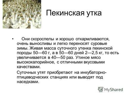 Презентація на тему птахівництво