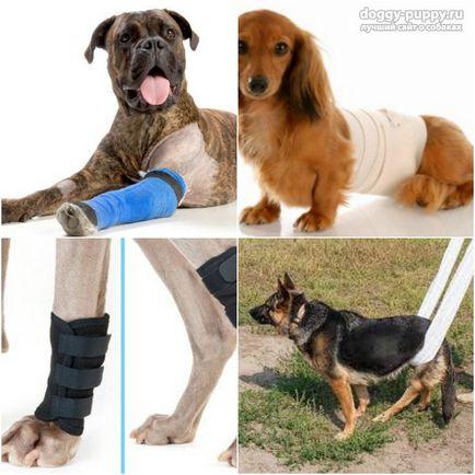 Болят Суставы У Собаки Лечение