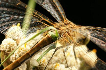 Jak fotografować latające owady