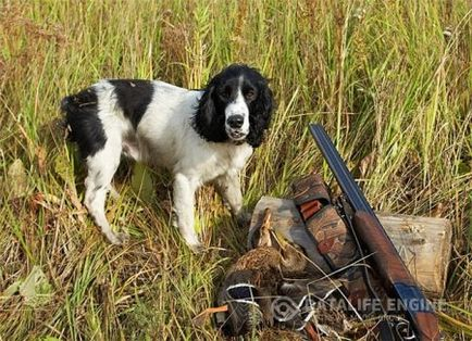 Jak prawidłowo polować na cietrzewia z psem