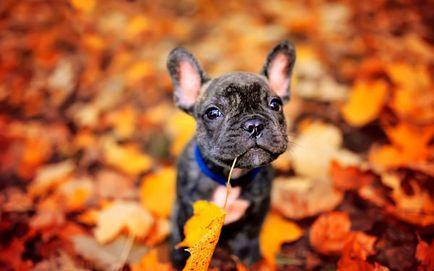 Чому у собак випадають очі чому у собаки випав очей що робити, якщо у собаки випадають очі