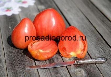 الطماطم (البندورة) بقرة الوصف وخصائص متنوعة ، وتزايد الطماطم بوش ، الفيديو والصور