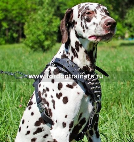 Шкіряна шлейки з шипами для собак «voltage spike»