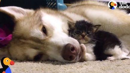Реакція собак, місця яких зайняли кішки