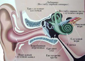 Шум у вухах лікування в домашніх умовах