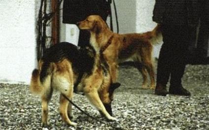 І ще сигнали примирення - продовжуємо вивчати мову собак