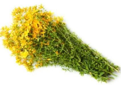 Які застосовують трави для полоскання горла, горлор