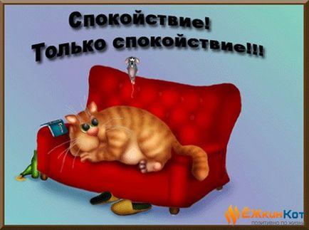 Jak pokonać kolekcjonerów - etap podejmowania decyzji - kot Yezkin