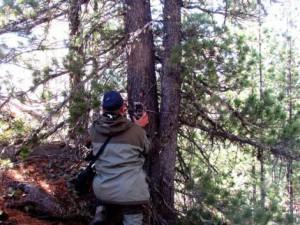 Как обнаружить фотоловушку в лесу