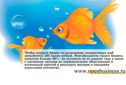 Jak otworzyć firmę do hodowli ryb akwariowych
