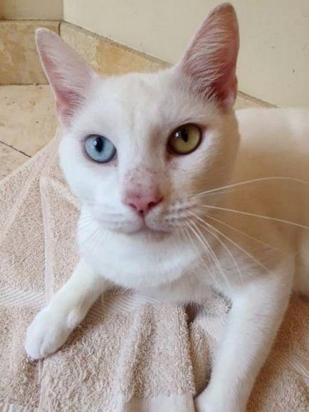 Сліпий кіт здивував своїх рятівників неймовірною красою очей після одужання