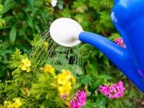 Які почвопокровнікі вибрати для саду, квіти в саду (садиба)