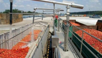 Виробництво томатної пасти як відкрити завод і яке купити обладнання, технологія виготовлення