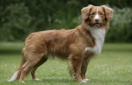 Порода собаки з фільму п'ять хвилин тиші як звали, фото і опис породи