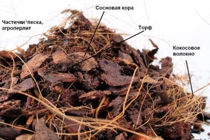 Як пересадити орхідею в домашніх умовах пересадка в грунт