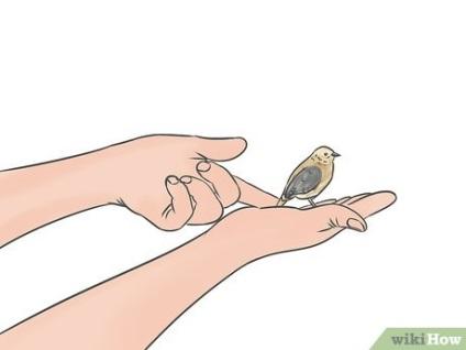 Jak dbać o ptaka, który uderzył w szybę