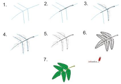 Як намалювати листя олівцем поетапно