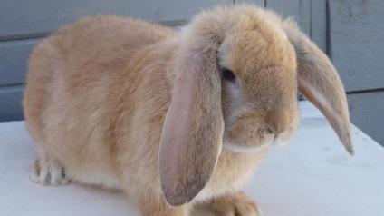 Розведення кролів за методом михайлова креслення клітин, вирощування, відео