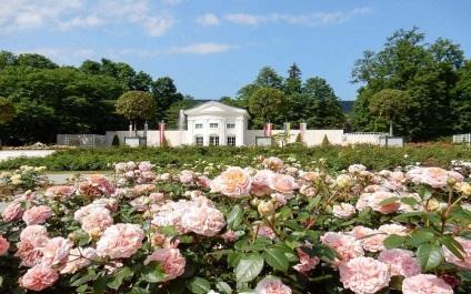 Розарій в Бадені в парку добльхоф - фото, відгуки, години роботи, як дістатися