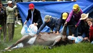 Jak chronić konia przed przegrzaniem