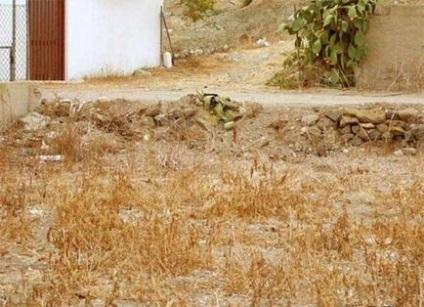 العثور على القط في الصورة