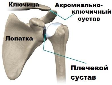 unguent arabesc din articulații durere în articulația umărului și articulația șoldului