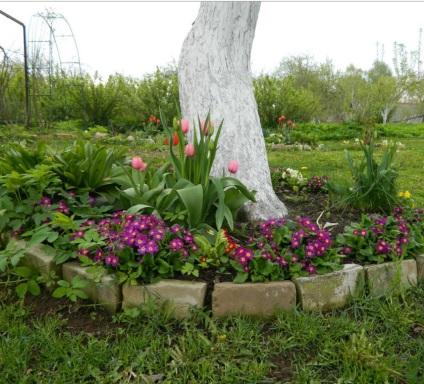 Jak uprawiać krokusy w ogrodzie