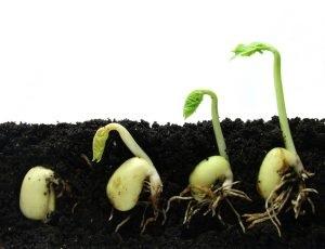 Дачні поради з галиной старосельцевой - сторінка 5 з 22 - корисні поради по вирощуванню овочів,