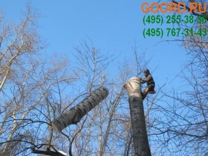 Що робити, якщо дерево небезпечно зачіпає дроти, обслуговування приватних будинків, котеджів