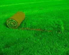 Догляд за газоном