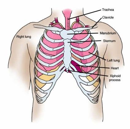 Как да се разшири гръдния кош