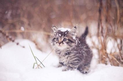 Жінка залишила в зимовому лісі 35 кошенят! Потім вона жорстоко поплатилася за це!