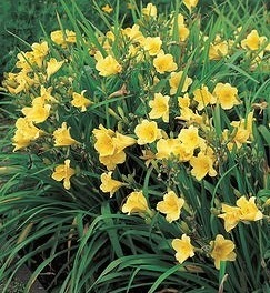 Jak założyć ogród kwiatowy jesienią tego roku - woda - źródło piękna i młodości