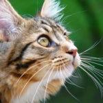 Jak i kiedy kąpać kota