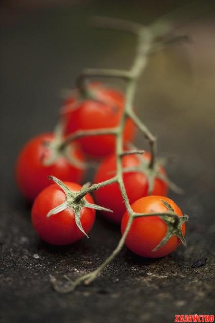 Jak wyhodować słodkiego pomidora