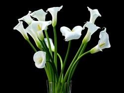 Чому кали називають «квітами смерті»
