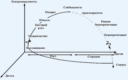 Життєвий цикл організації - етапи дорослішання (1 частина)