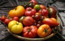 Jak uprawiać pomidory w domu