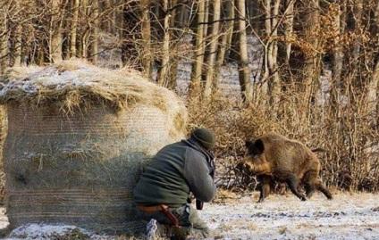 Зимова полювання на кабана з підходу, з вишки, з собаками, з засидження, загоном