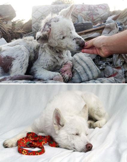До і після несамовиті приклади перевтілення собак, які знайшли люблячих господарів - новини в