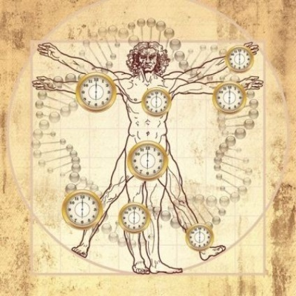 Шпаргалка по вашим біоритмам активність органів тіла в залежності від