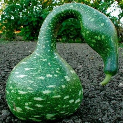 Декоративні овочі (що з них зробити, як виростити, рецепти приготування)
