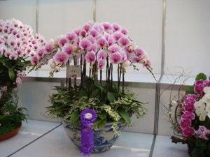Правила пересадки орхідей в домашніх умовах і догляд за квіткою, поради досвідчених садівників