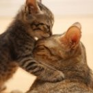 Po co śnić martwego kota z kociętami, które miauczą