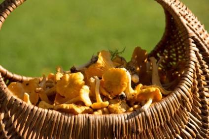 Jak szukać grzybów