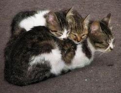 Кот подолав понад три тисячі кілометрів за два роки в пошуках своїх господарів