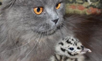 Про котів, які виростили чайку - планета і людина
